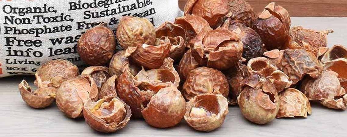 feature soapnuts image