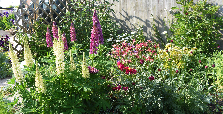 variety flower plants