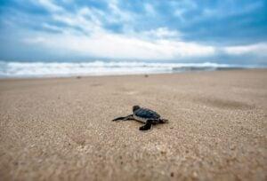 turtle 2201433 1920