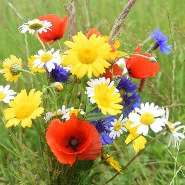 Beebombs Native Wild Flower Seedballs Species
